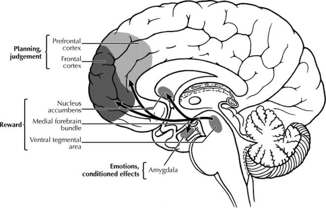 brain_planning-reward-emotion_diagram.jpg